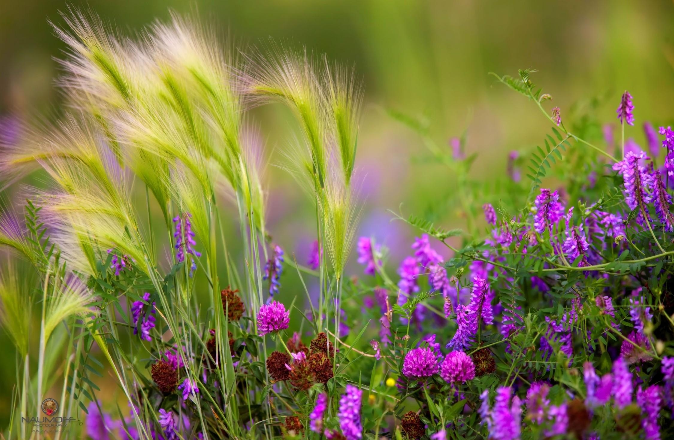 Картинки на рабочий стол полевые цветы самые красивые