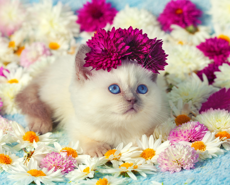 Кошки фото открытки, для детей звери