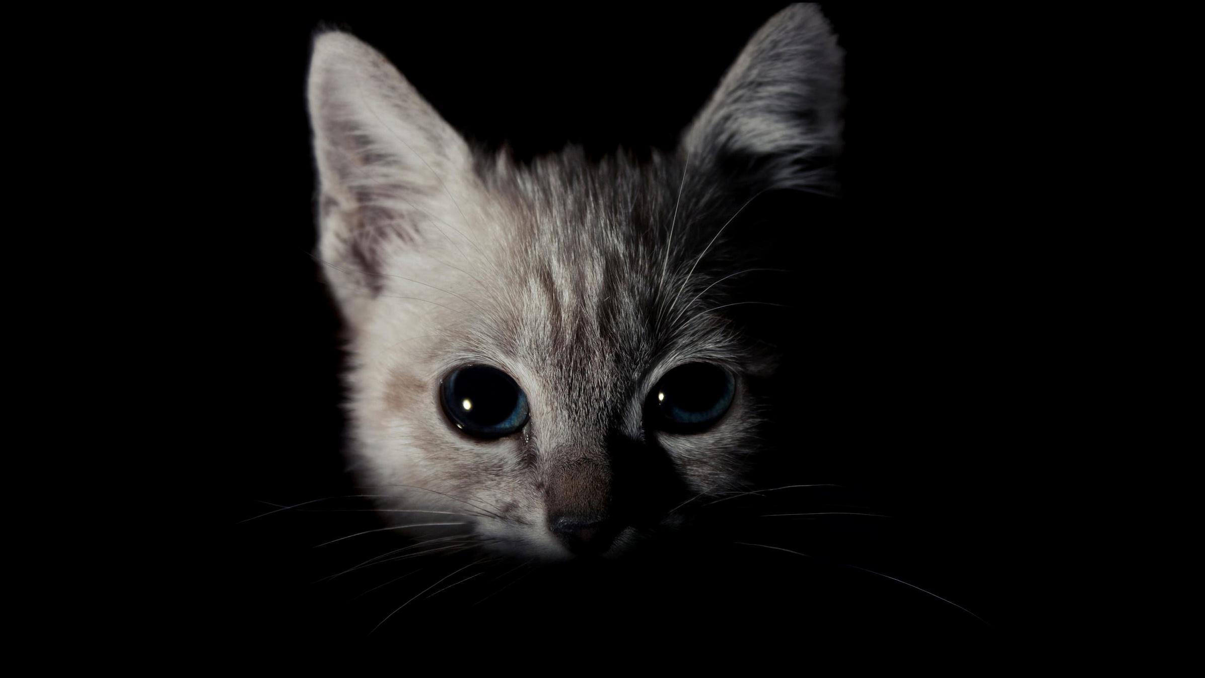 свою кот во тьме картинки сих пор удалось