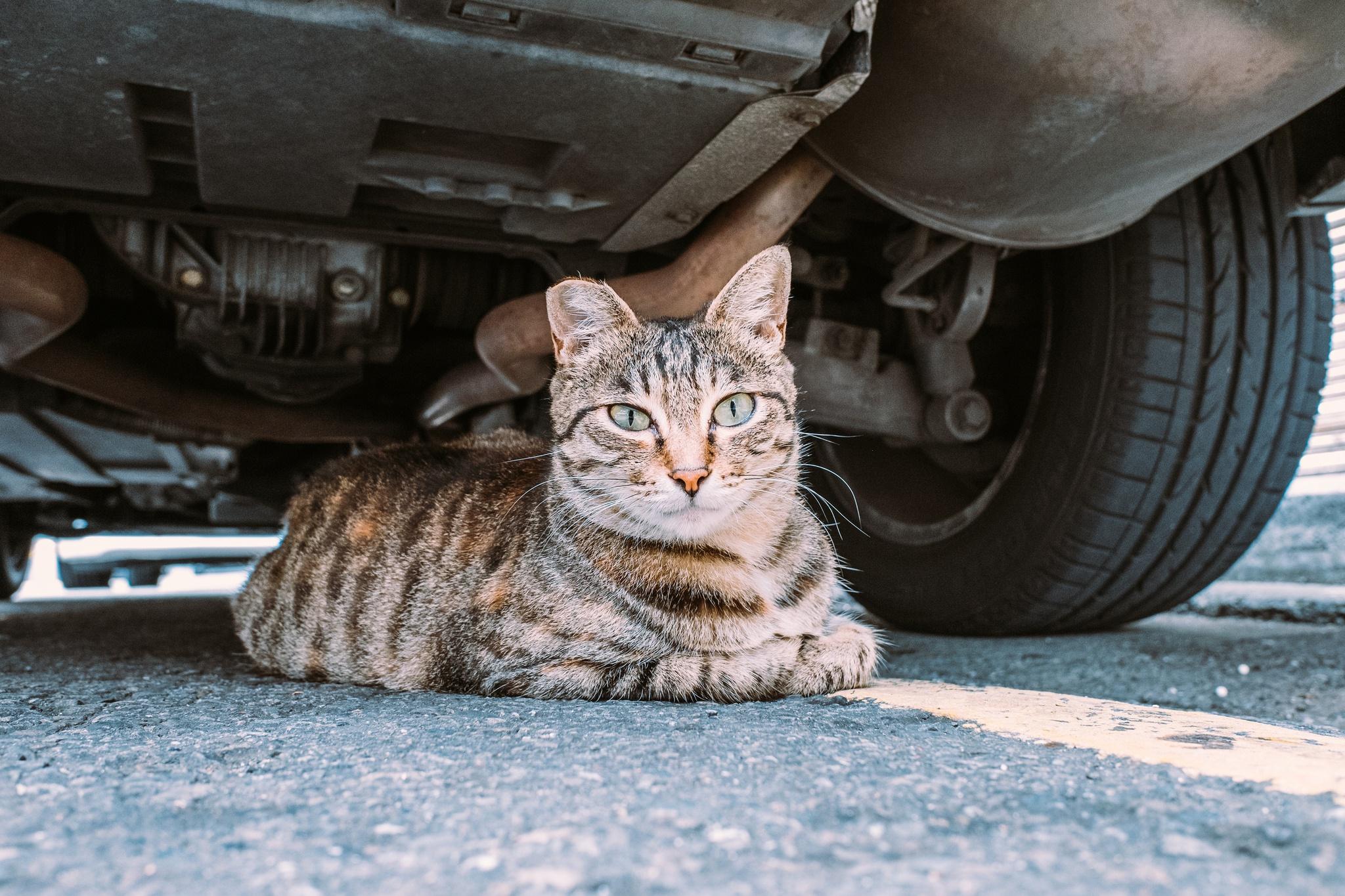 Машины с кошками