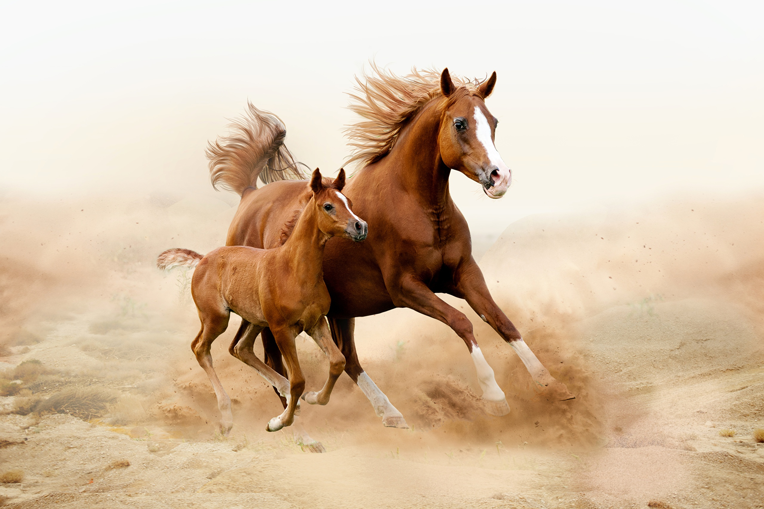 картинка с лошадью красивый город, удовольствием