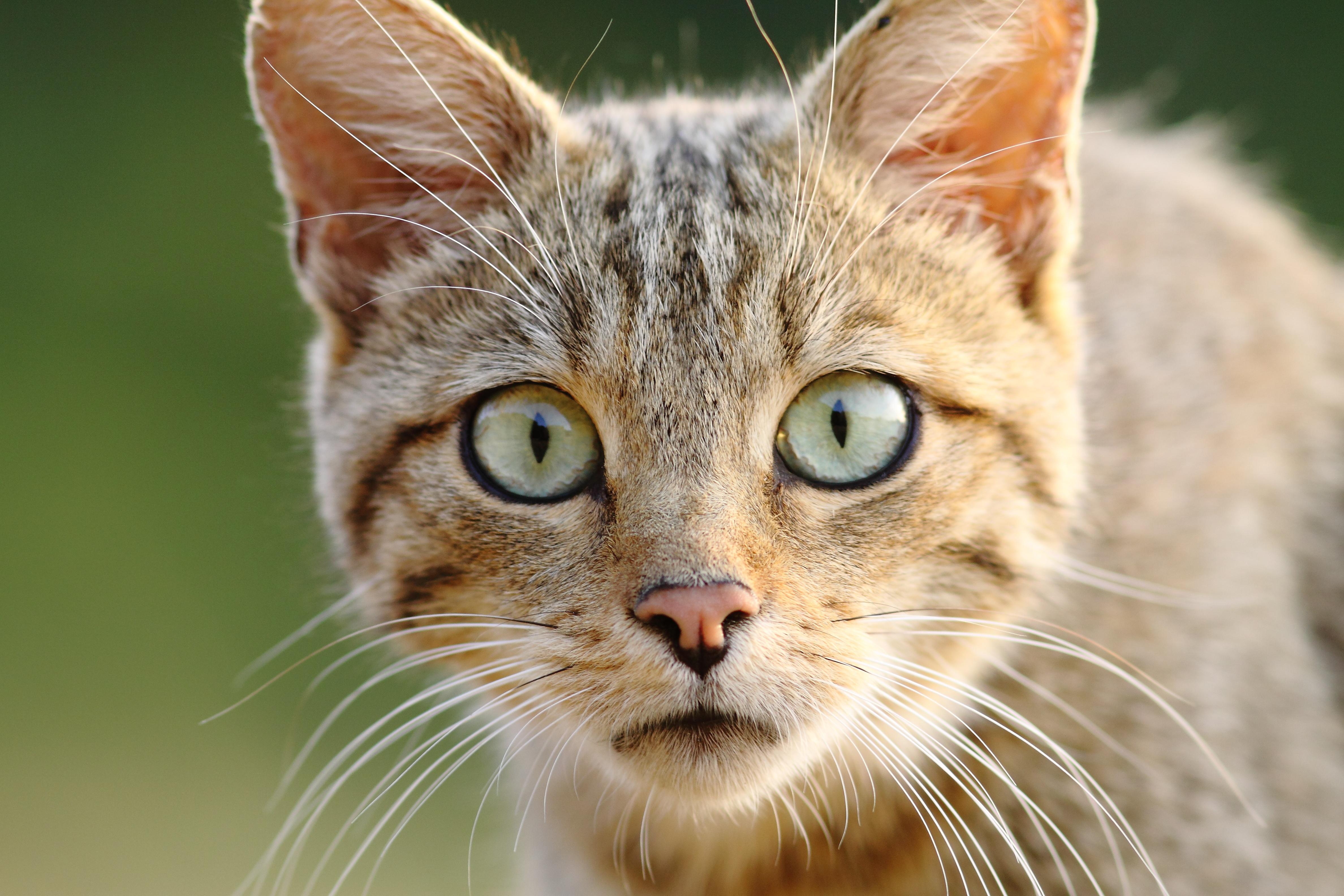 Молодой, прикольные кошачьи морды картинки
