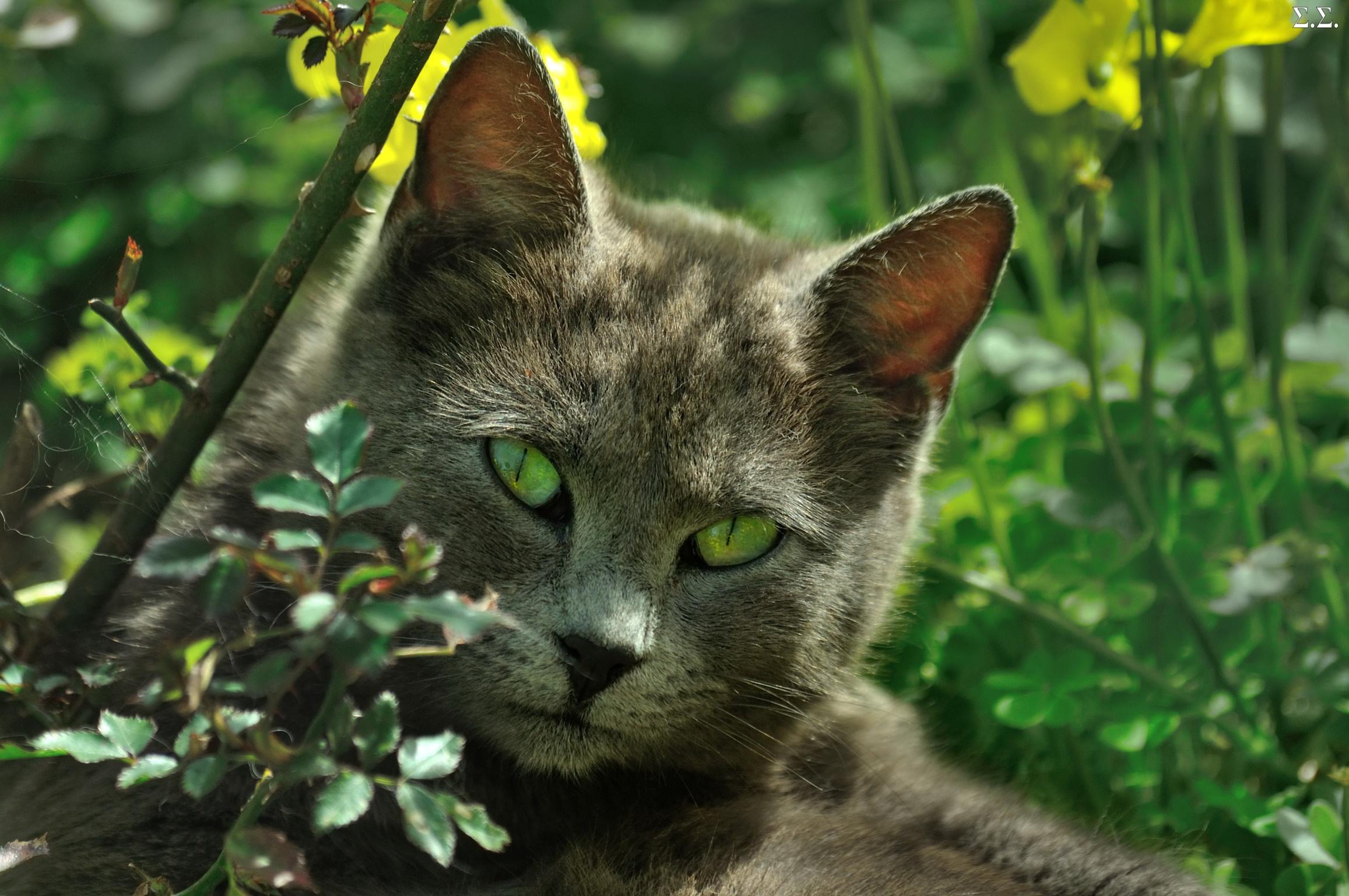 заранее кошки с зелеными глазами фото скорое