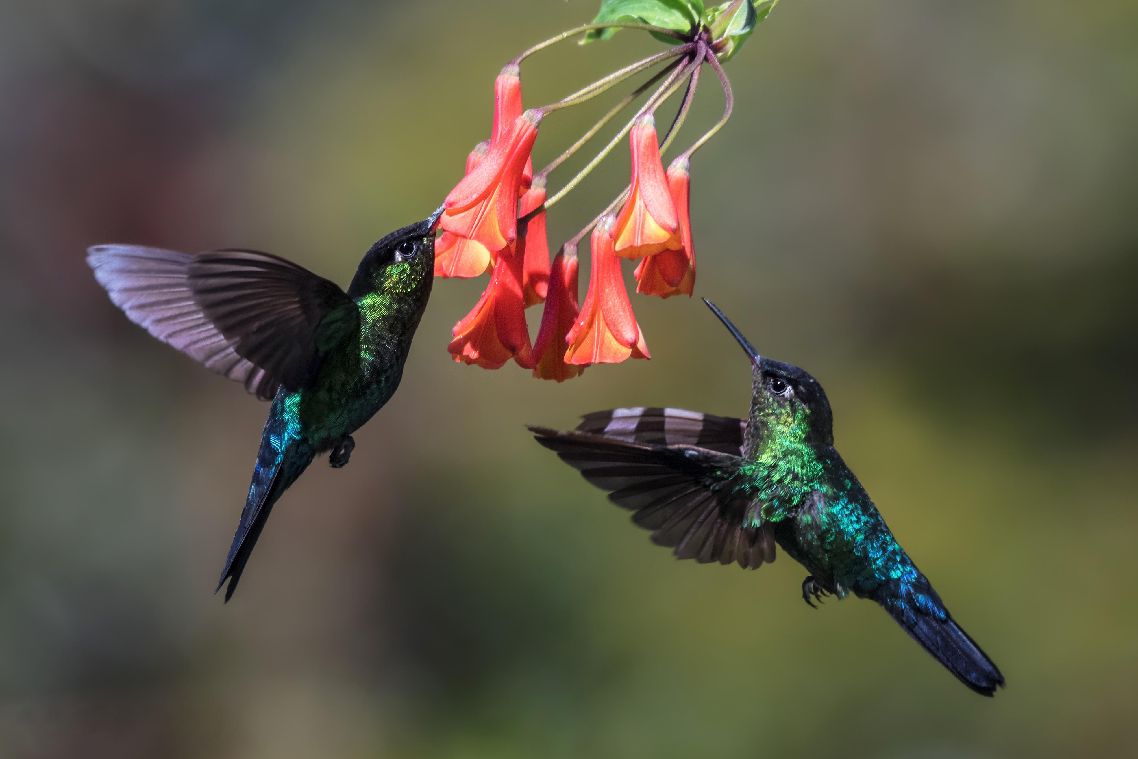 Картинки красивых птиц в полете, для вацап днем