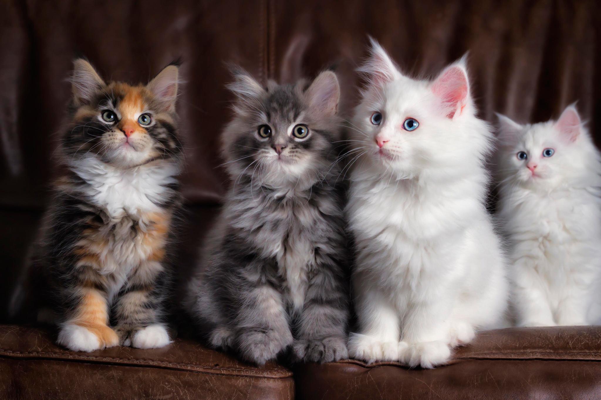 римляне картинки кошаки и котята потребуется