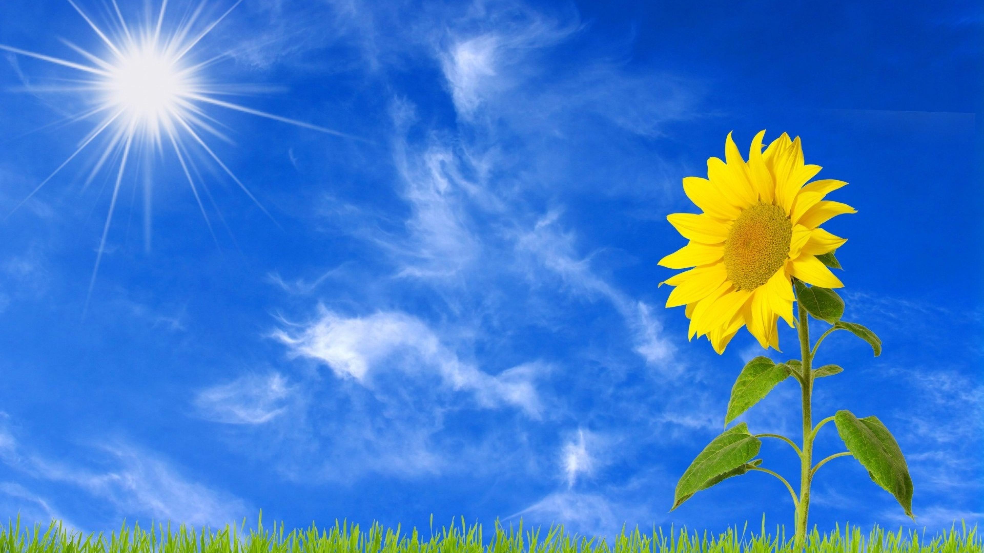 Открытки солнца