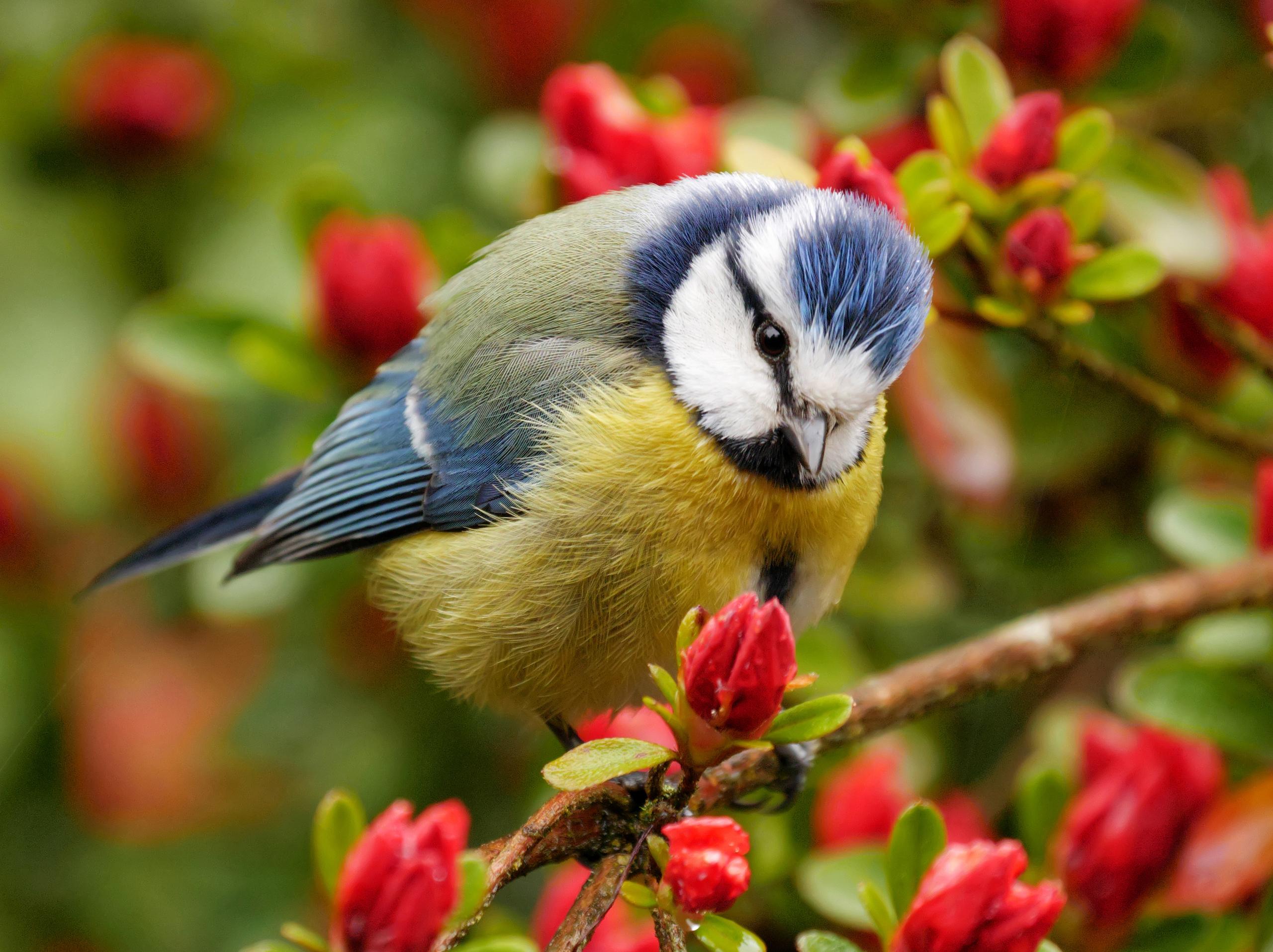 Птицы на природе красивые меньшов