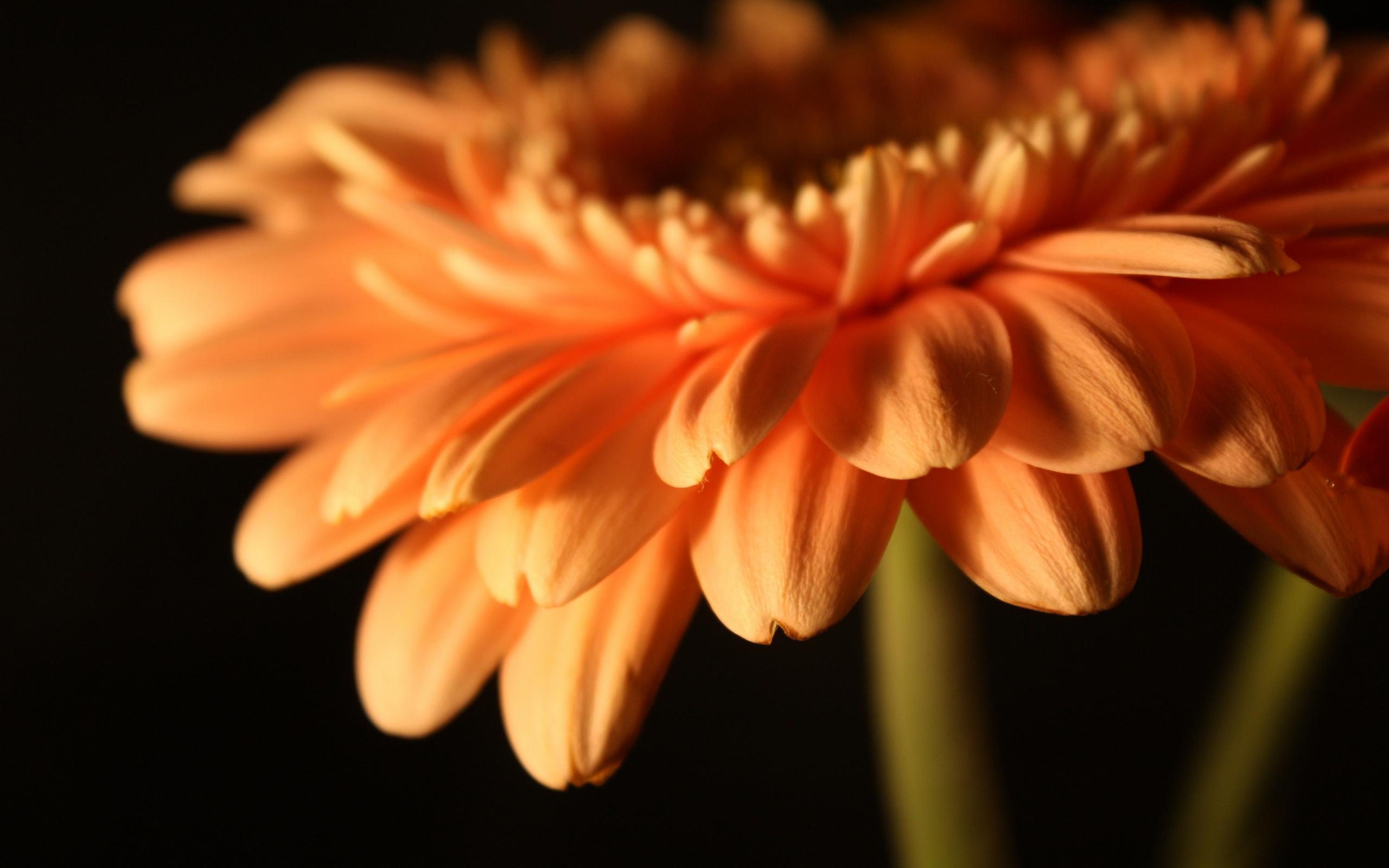 только картинки цветочки в отличном качестве вам приобрести чистокровных