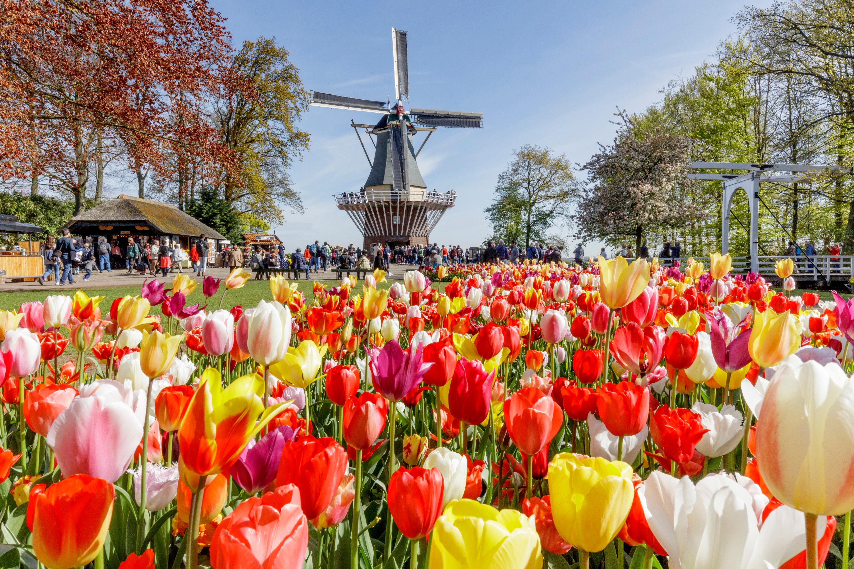 разбираешься нидерланды апрель фото уникальный