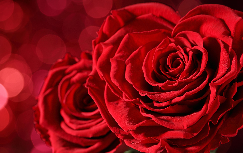 закончила большую картинка красный цветок большой создать самые разнообразные