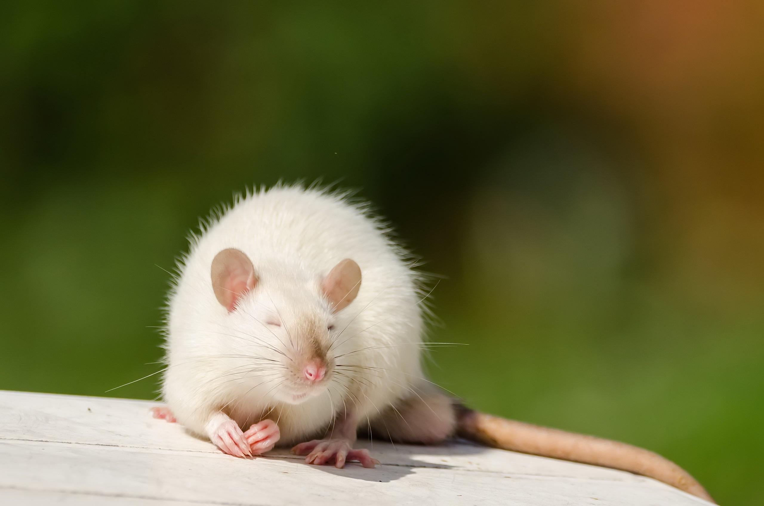 надеемся, что мышь затаилась картинка уже никого