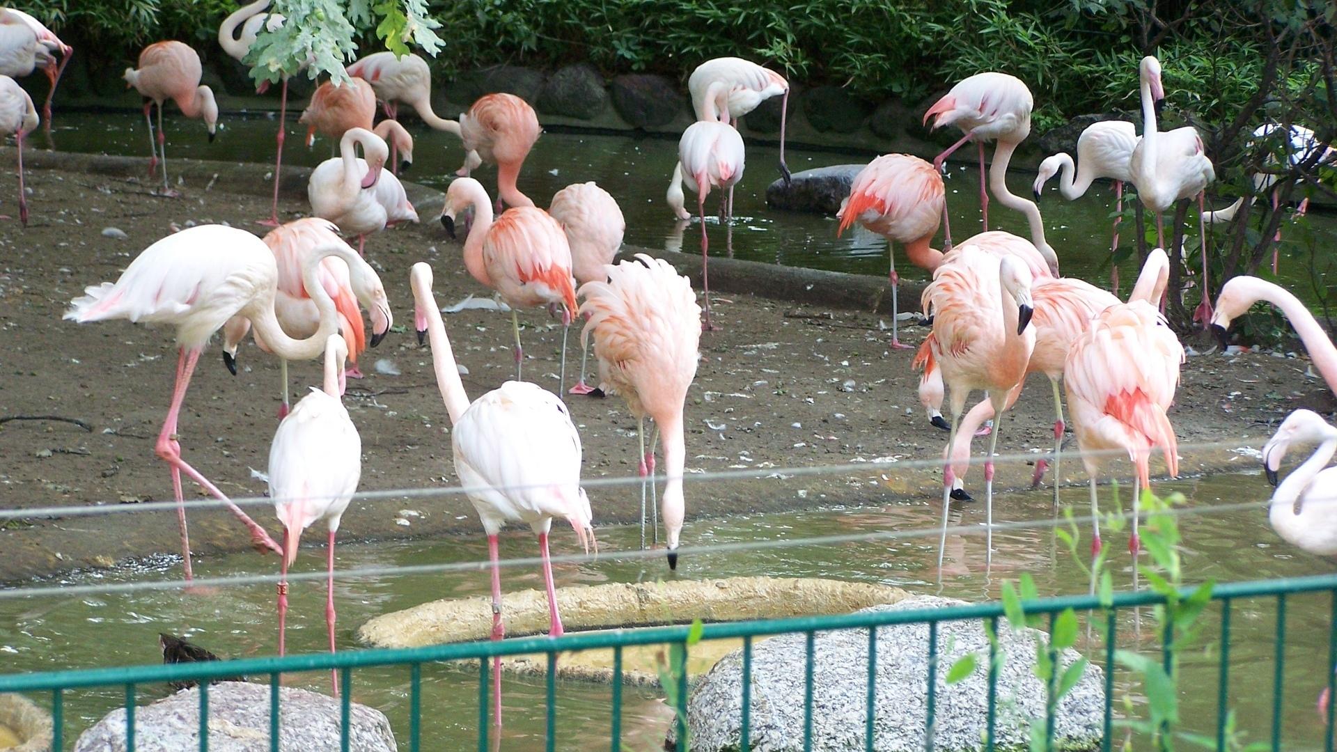 Картинки птицы в зоопарке для детей