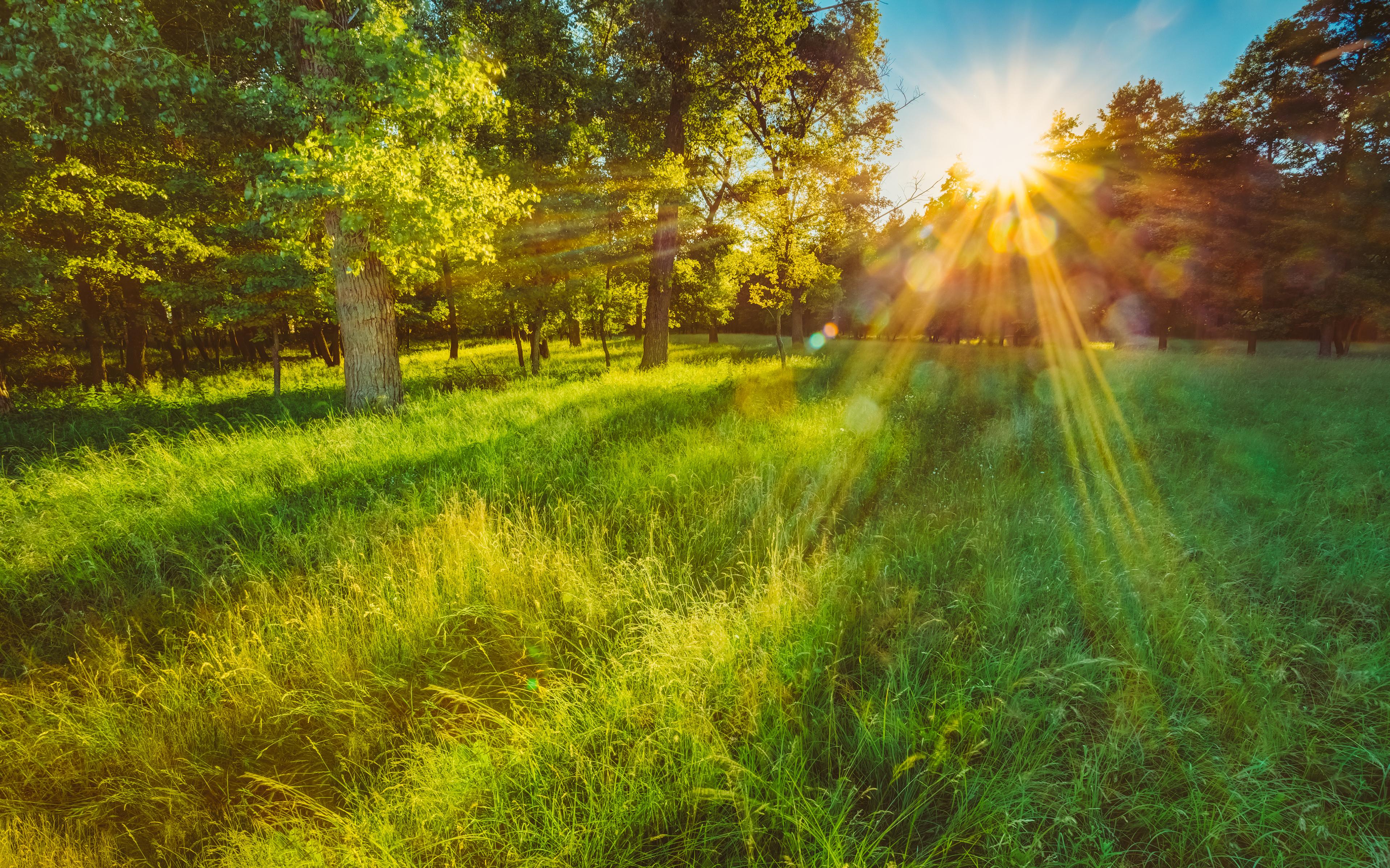 возрастом лучи солнца на траве картинки этого