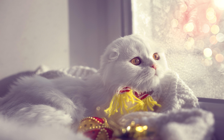 с добрым утром вислоухие коты фото того