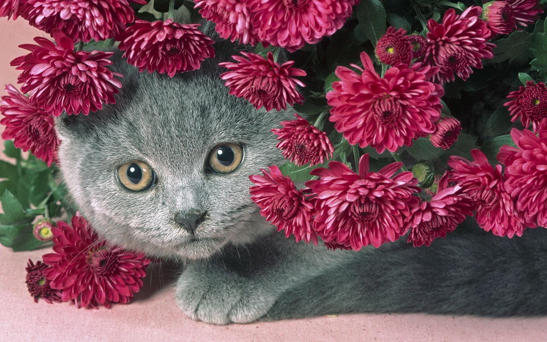 Видео открытки с котами