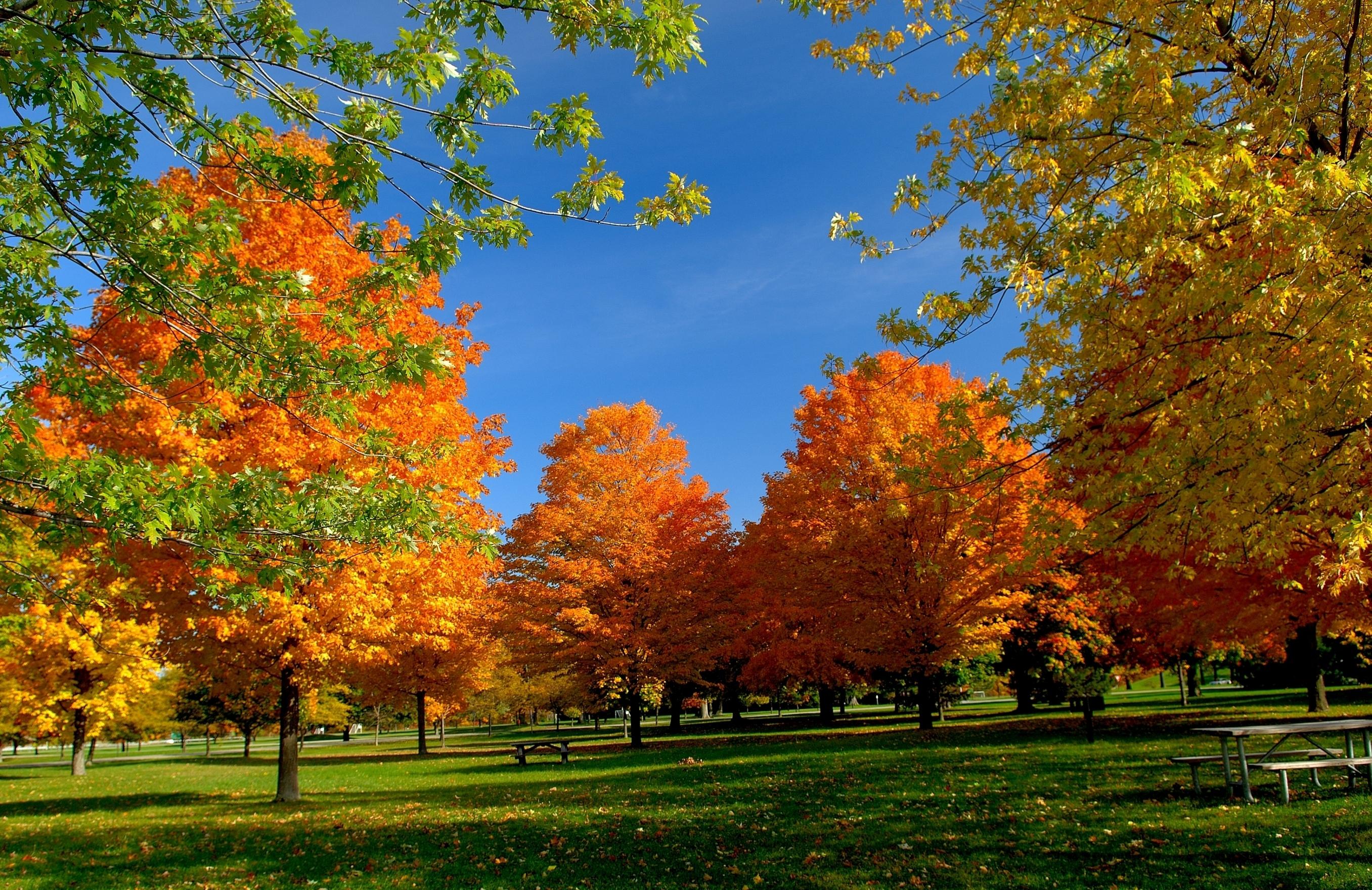 Картинка про осень сентябрь