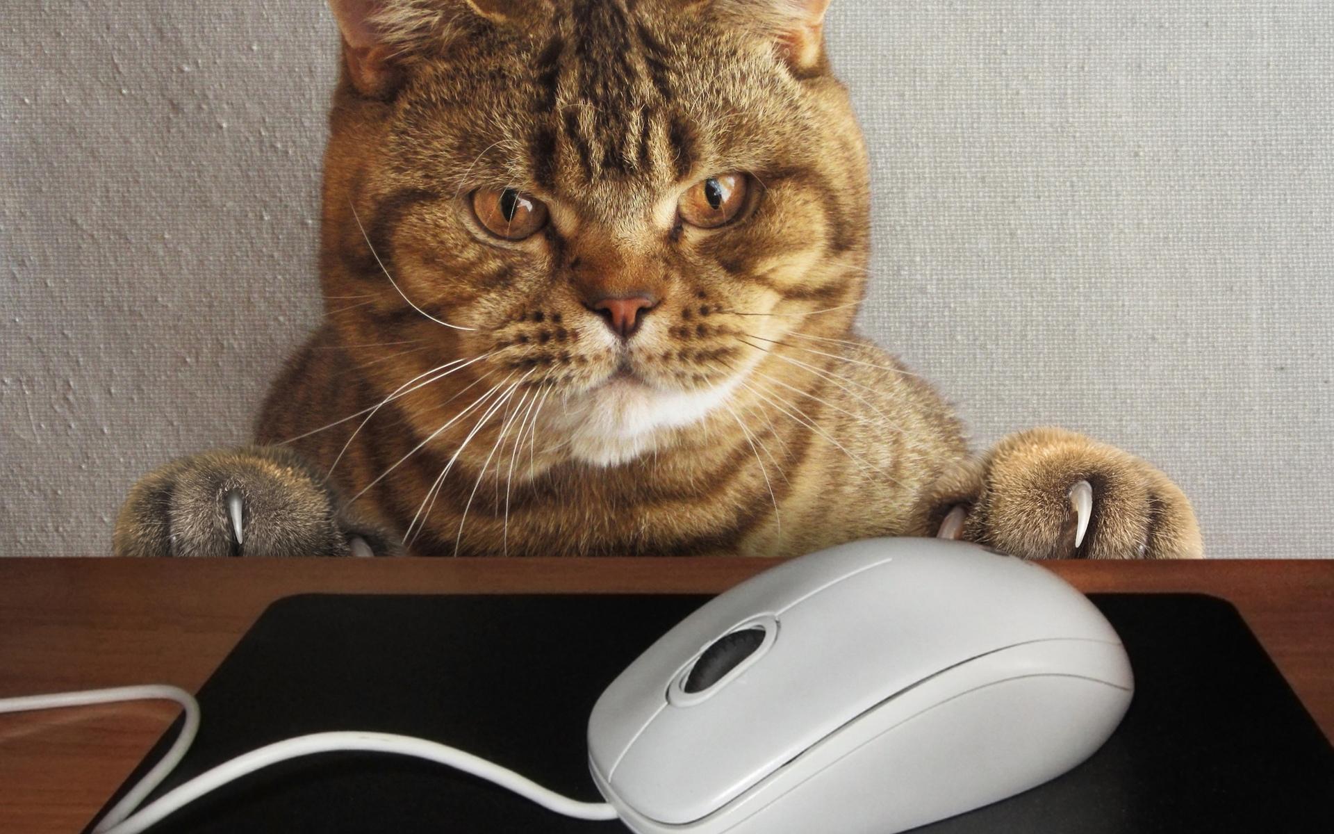Картинки коты и компьютер