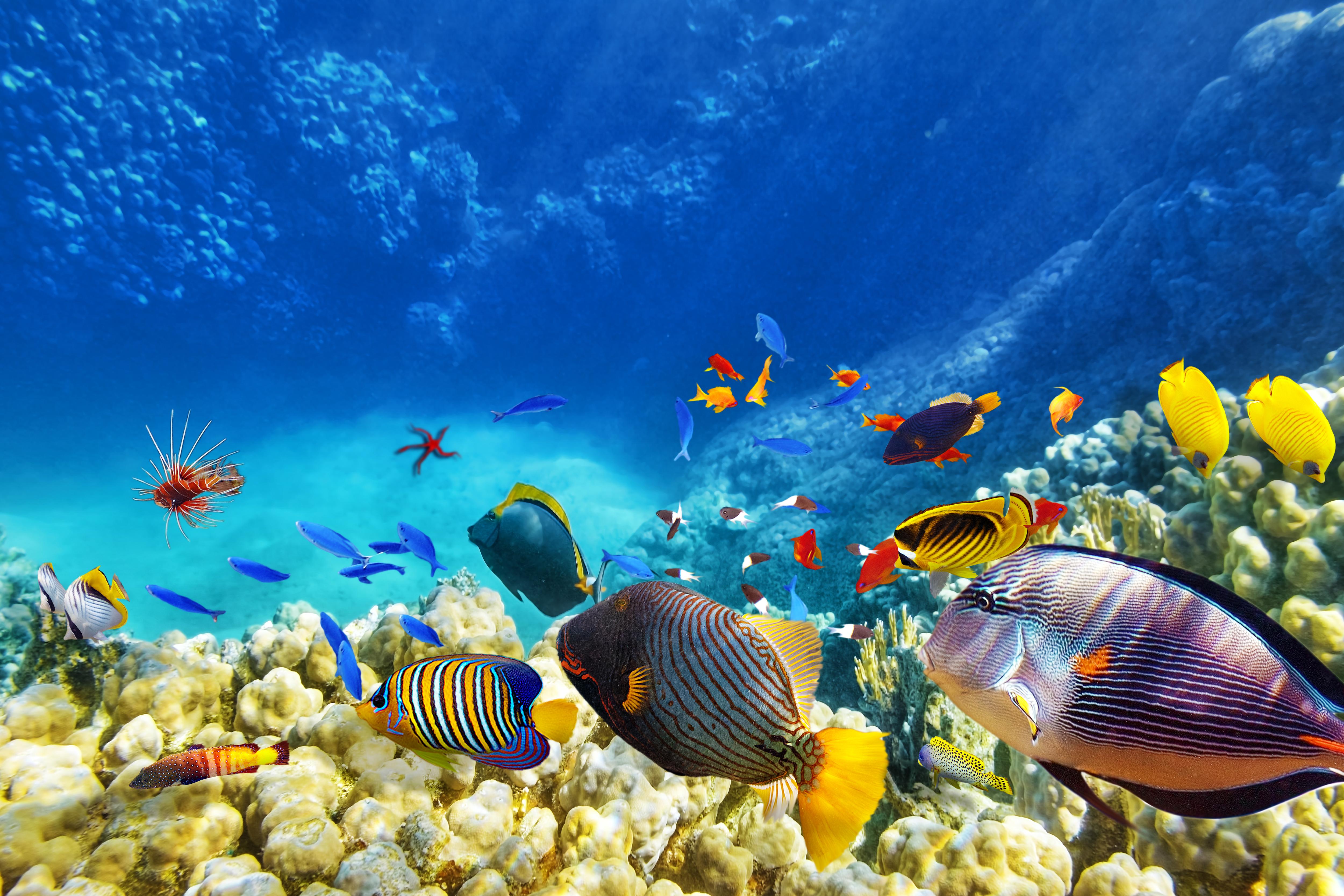 микроскоп фото море и рыбы в высоком разрешении домов под ключ