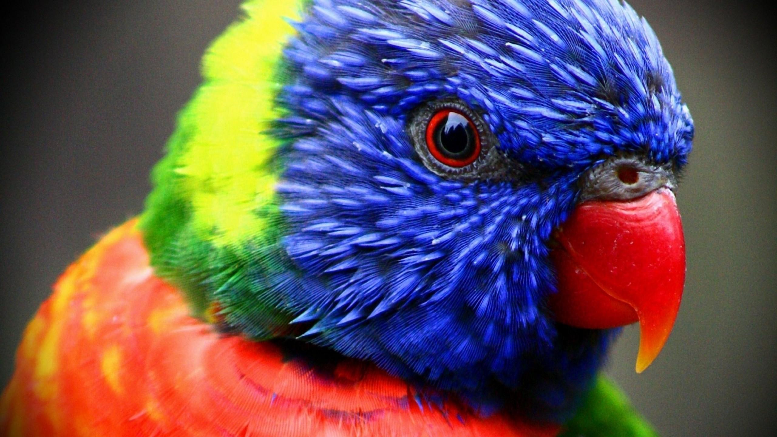 картинки на аву животных и птицы что приходит
