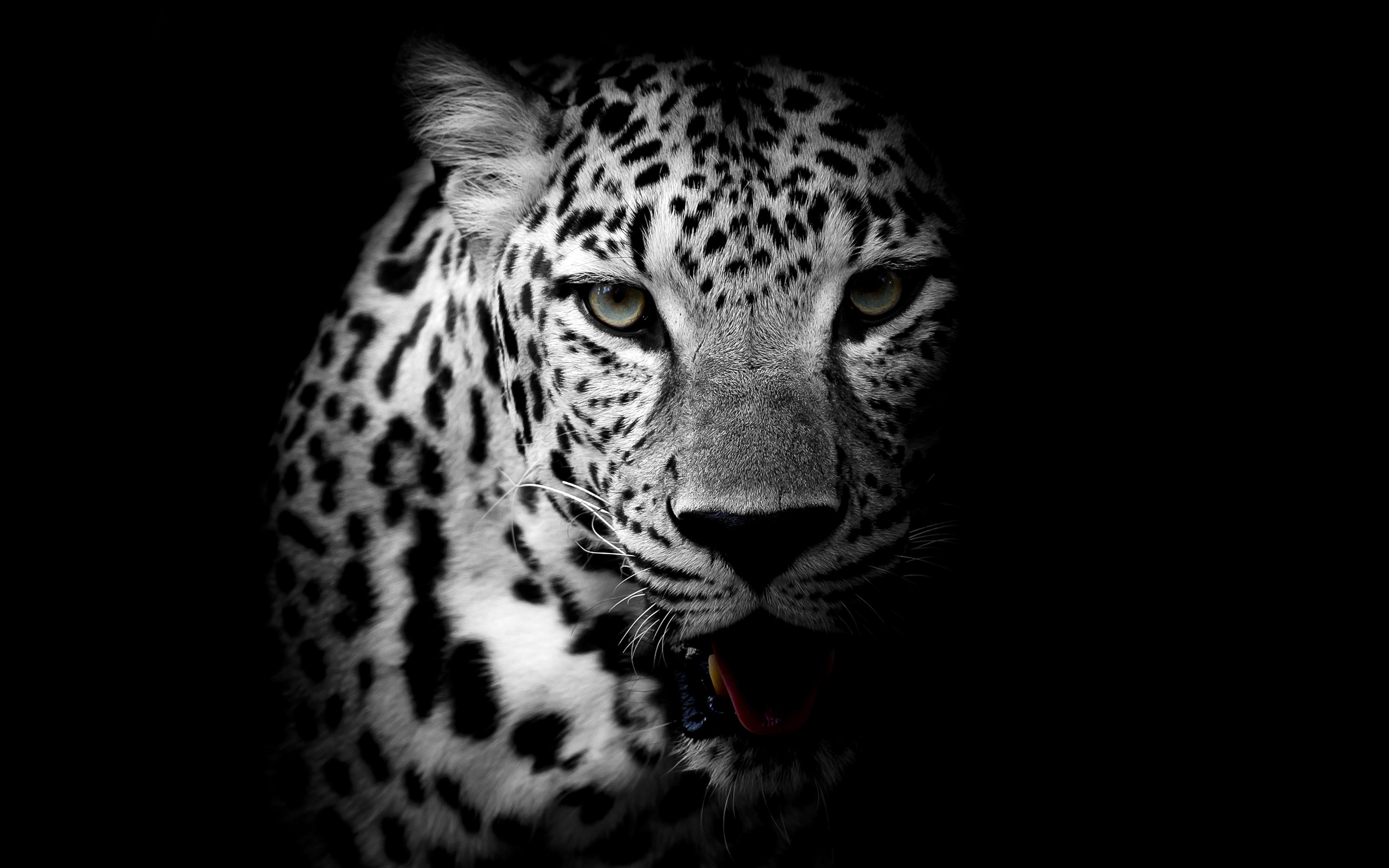 Картинки леопарда черно-белые
