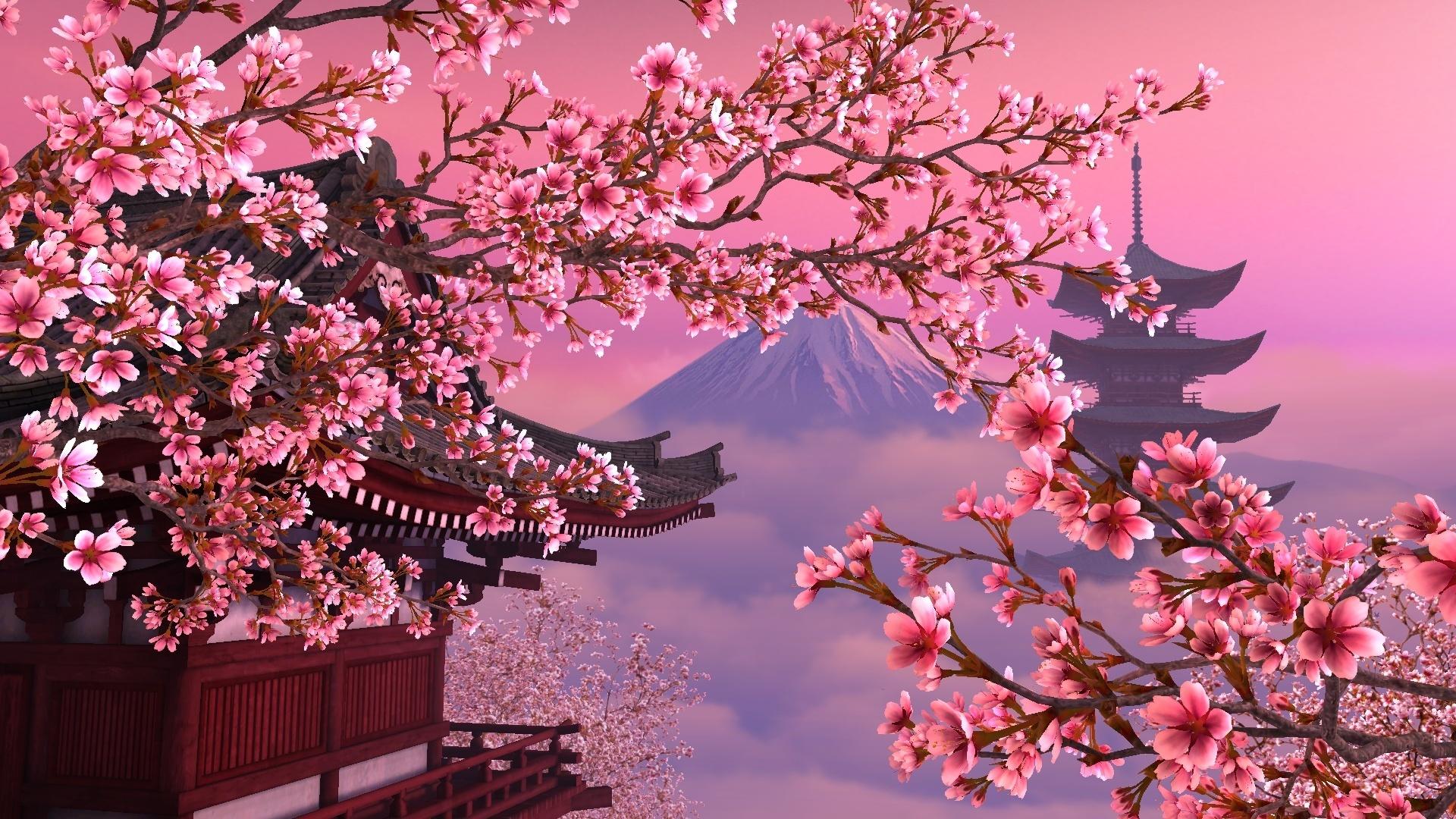 Постер цветы сакура