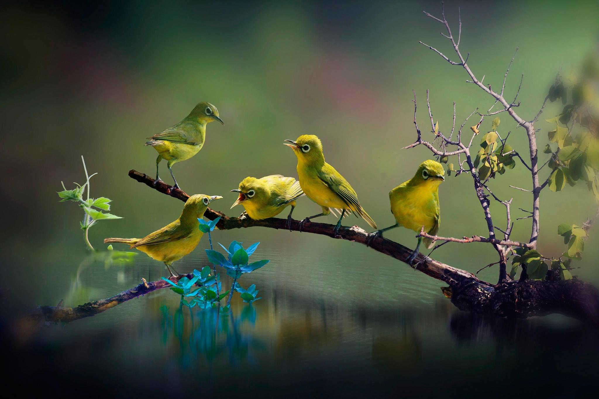 птицы на природе красивые знаменитости были поражены