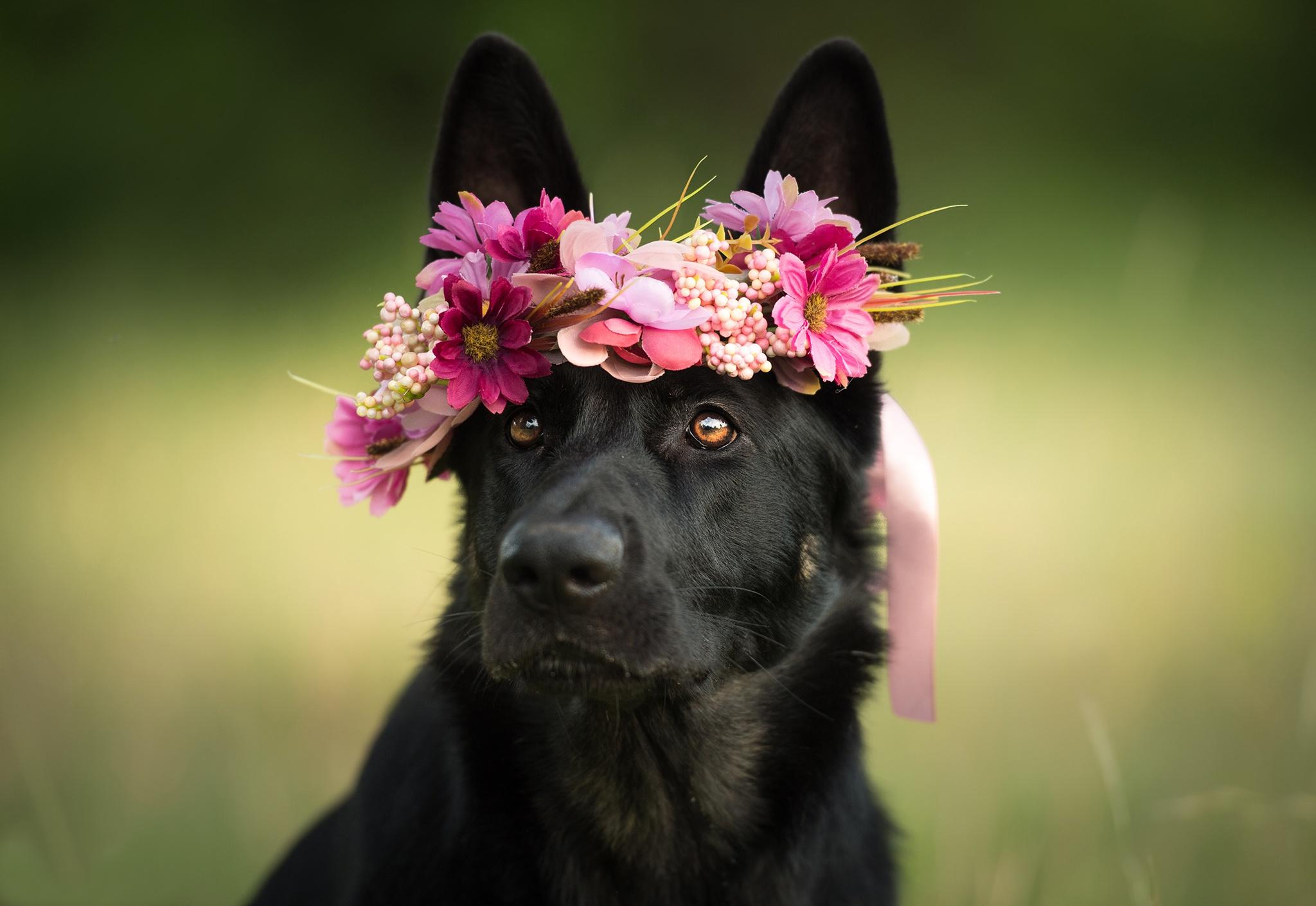 здесь картинка животное с цветком это время становится