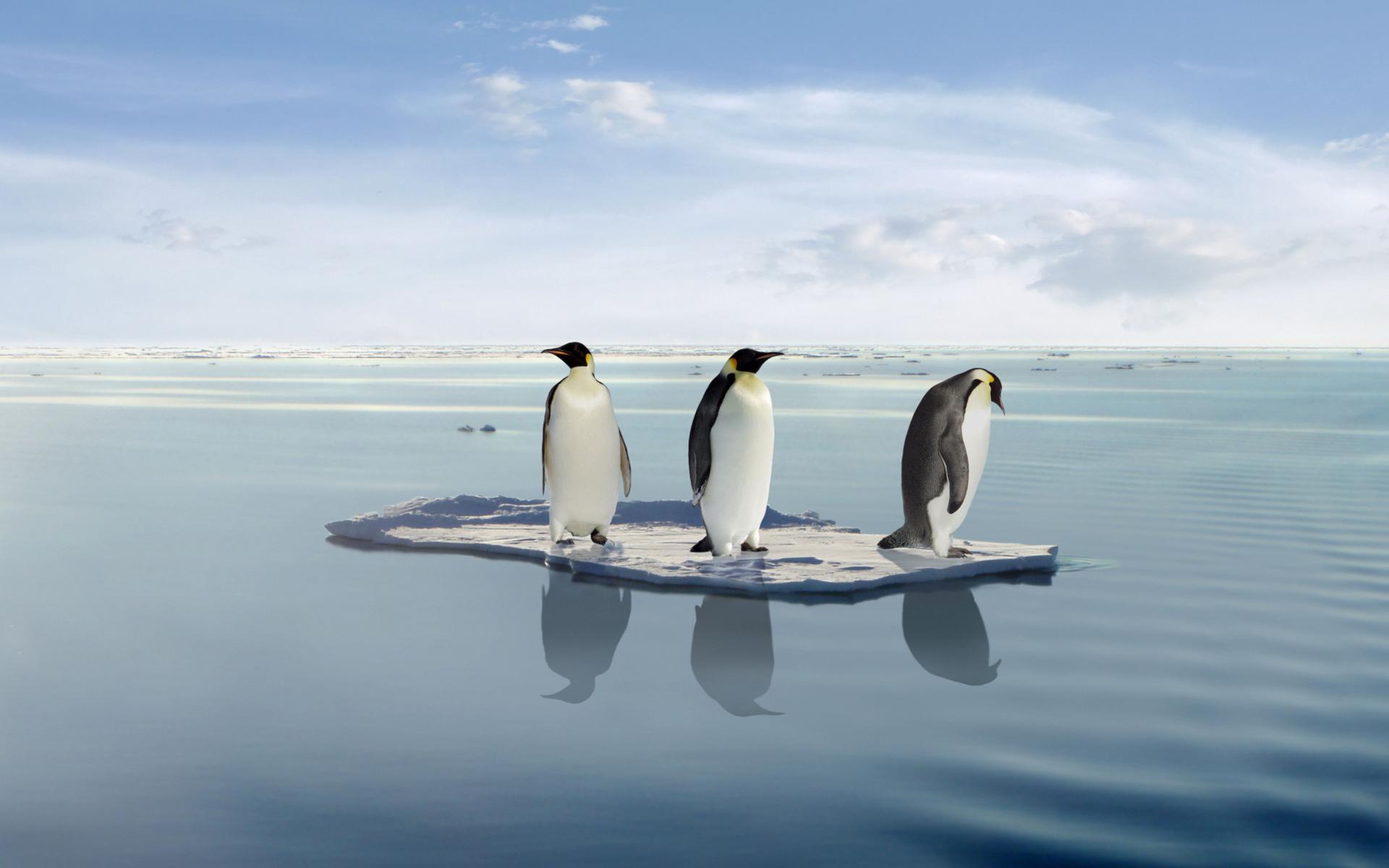 обои на рабочий стол пингвины на льдине нежные заварные