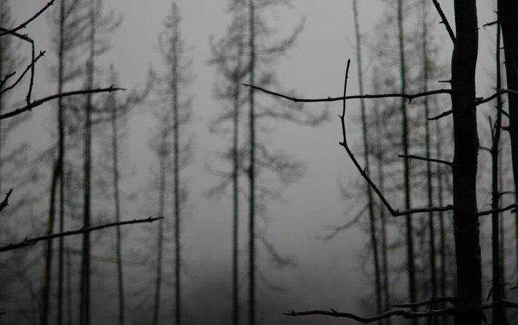Природа, трава, деревья, туман