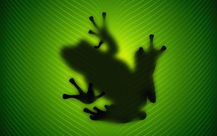 заставки на телефон лягушки № 58378 бесплатно