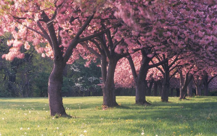 Лес цветы весна трава поляна