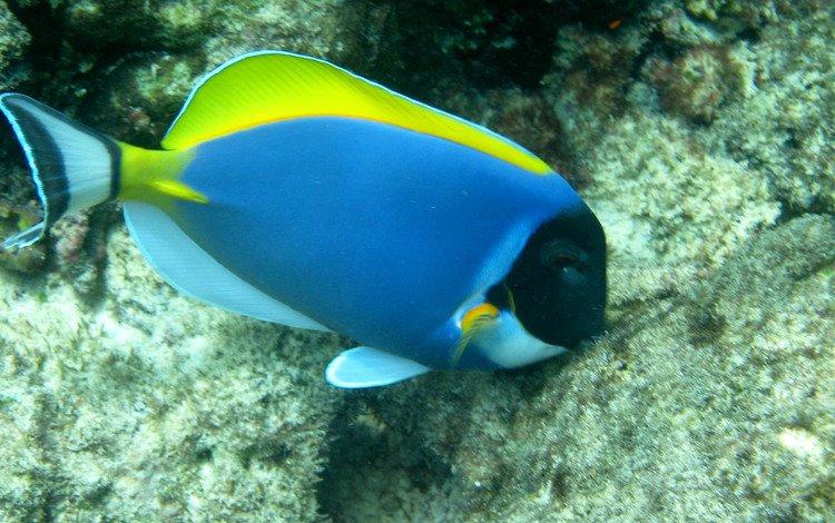 Скачать обои океан подводный мир