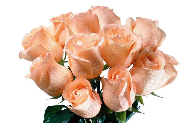 Скачать Картинки цветы поздравительные 1000x625 px.