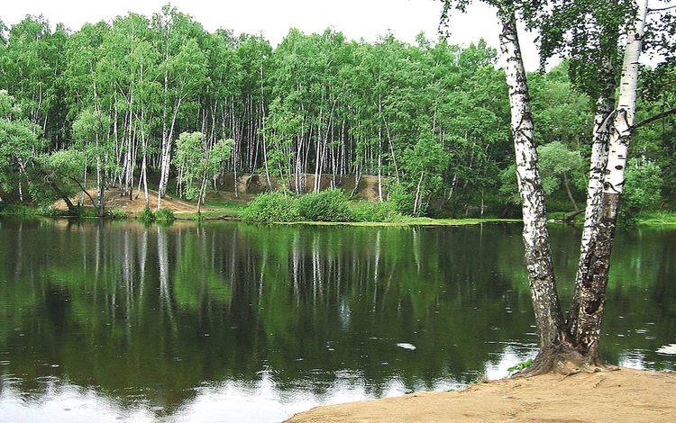 природа береза деревья вода озеро лес  № 2791899 загрузить