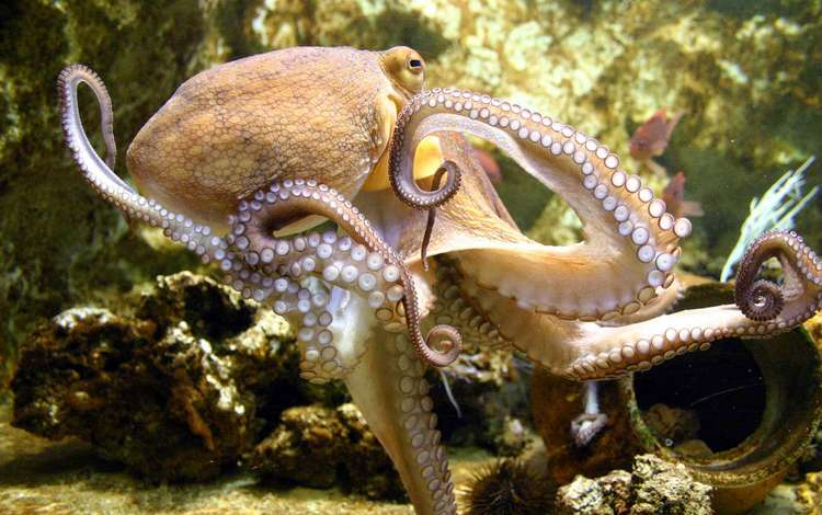 Картинки по запросу подводный мир осьминоги