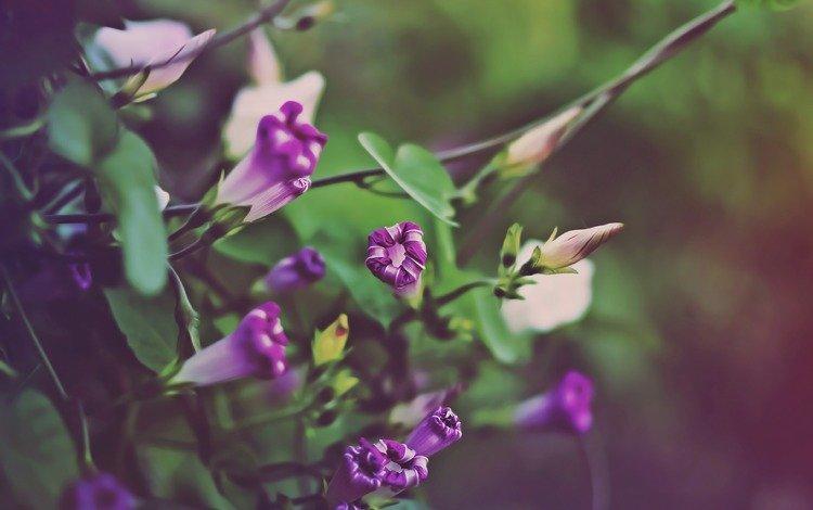 названия оттенков цветов с картинками