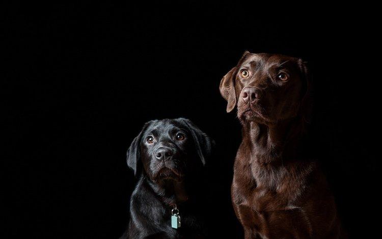 Пёс черный взгляд  № 1127506 загрузить