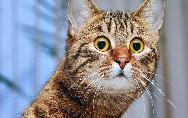 скачать бесплатно кота на планшет андроид бесплатно