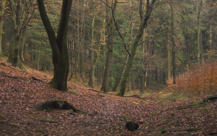 gologo-lesa
