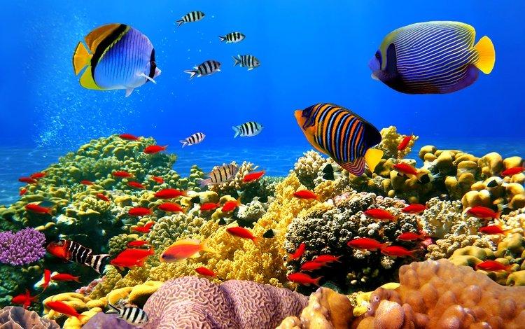 Aquarium Live Wallpaper  Apps on Google Play