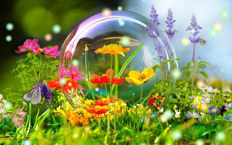 Обои цветы, лето, бабочка, фотошоп, красиво для рабочего стола #94560