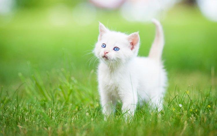 2 Cute Black and White Kittens wallpaper  ForWallpapercom