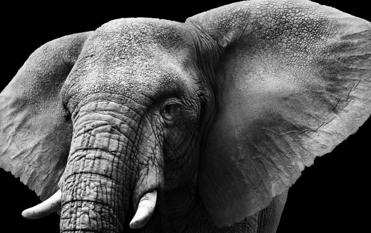 Essay on Elephant for Students in English  A Place for