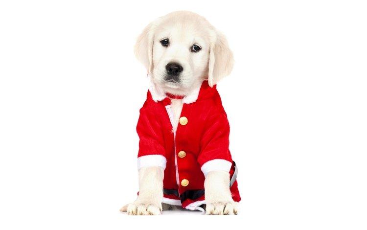 Картинка собака на новый год