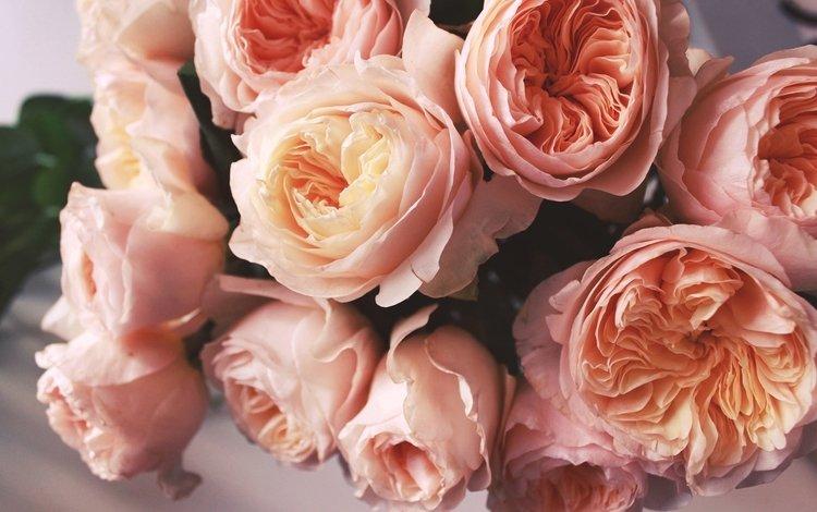 Фото цветок персиково цвета