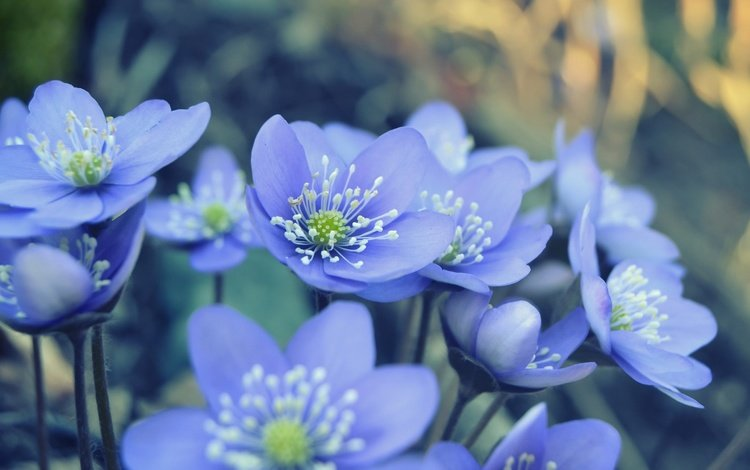динамо челси онлайн Wallpaper: Цветы Природа Фото